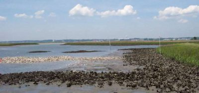 The North Carolina Coastal Federation created this oyster reef in Hoop Pole Creek in Carteret County. Photo: N.C. Coastal Federation