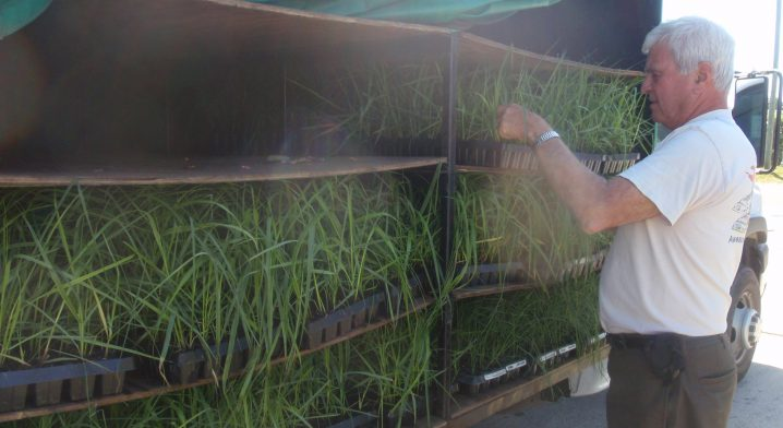 Carlton Campbell will receive a Lifetime Achievement Award for his pioneering work with marsh grass seedling. Photo: N.C. Coastal Federation