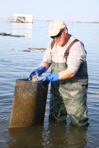 Joey Daniels removes oysters from a bag. Photo: N.C. Sea Grant