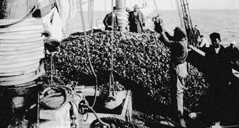 Oysters are piled high on the deck of a ship in Washington, North Carolina, in 1884. Photo: NCpedia.com