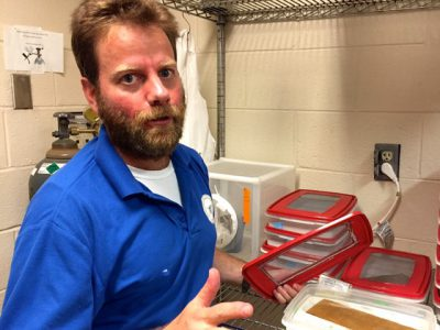 Michael Reiskind at North Carolina State University with a Tupperware container holding wriggling larvae hatched from mosquito eggs trapped in the wild. Photo: Catherine Clabby
