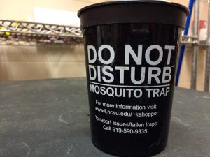 For capturing Aedes mosquito eggs in the wild, plastic stadium cups are the traps of choice. Photo: Catherine Clabby