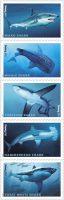 sharkstamp