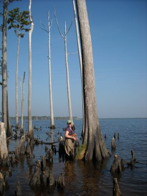 """Cypress trees and so-called """"ghost forests"""" may help provide a more complete picture of the health of North Carolinas sounds and a better understanding of how shores are changing. Photo: Marcelo Ardón"""