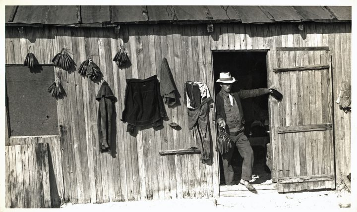 An Onslow County banks fisherman is shown in this 1930s image, dressed up after returning to Brown's Island from a trip to the mainland the previous day and posing with a liquor bottle and a string of dried mullet roe. Photo: Charles Farrell, from the North Carolina State Archives in Raleigh.