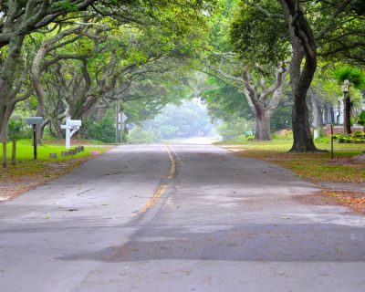 Branches of live oak trees form a canopy over the road in Atlantic, a Down East community in Carteret County. Photo: Lillie Chadwick Miller