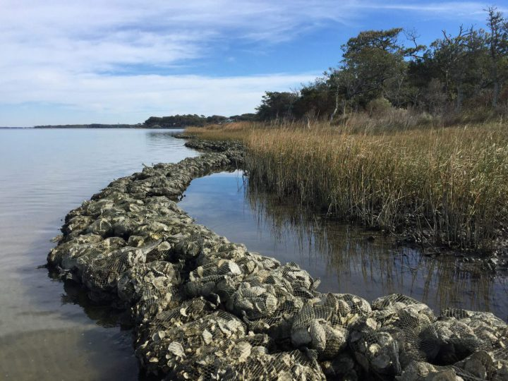 North Carolina Coastal Federation staff and volunteers have been working on a living shoreline at a summer camp and conference center, the Trinity Center, in Pine Knoll Shores. Photo: Rachel Bisesi