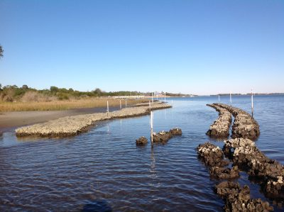 North Carolina Coastal Federation staff, with the help of volunteers, built a 310-foot living shoreline this year at Morris Landing. Photo: North Carolina Coastal Federation