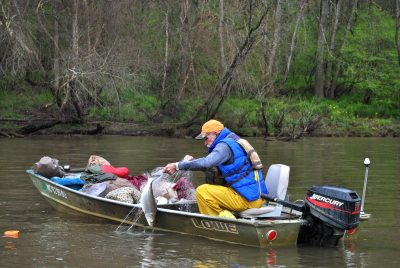 F.P. White of Riegelwood pulls in an American shad. Photo: Hannah Miller