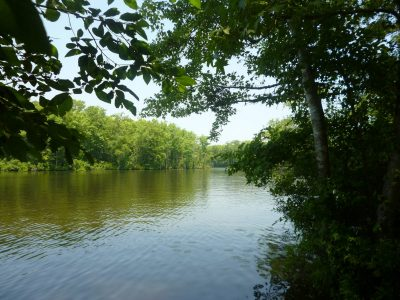 The Gates County tract is between 30,000-acres of the Chowan Swamp Game Lands owned by the state and 3,100-acres of the South Quay Nature Preserve owned by Virginia Department of Conservation and Recreation. Photo: Coastal Land Trust
