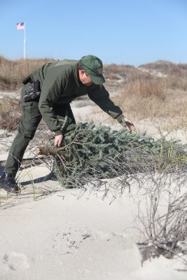 Paul Branch, a Fort Macon National Park ranger, places a recycled Christmas tree on a dune at the park. The rangers use the trees to catch sand and rebuild the dunes. Photo: Lance Cpl. Cory D. Polom, U.S. Marine Corps