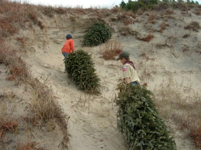 Cub scouts from Troop No. 130 Morehead City placing trees in the sand dunes at Fort Macon State Park. Photo: Randy Newman