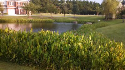 A robust vegetative buffer improves water quality. Photo: North Carolina Cooperative Extension