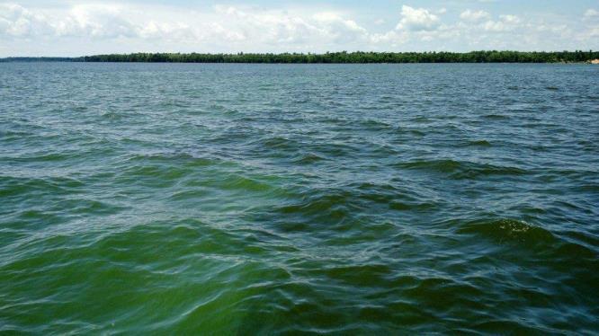 An algal bloom in the Chowan River, June 2015. Photo: NCDEQ