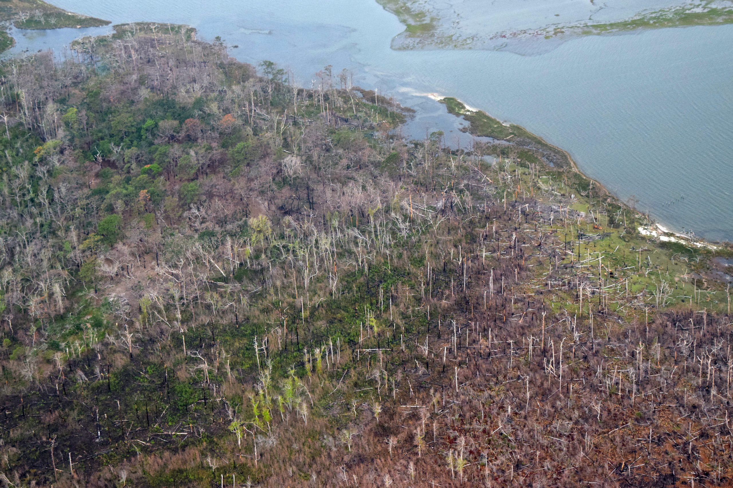 Ghost forests like this one on the North Carolina coast are the result of widespread tree death caused by increased exposure to saltwater. Photo: Mark Hibbs/SouthWings