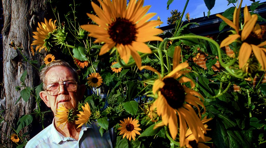 The late William Best, a Stumpy Point native, poses amongst his sunflowers for a portrait when he was 80. He grew a patch outside his kitchen window every summer and sometimes the flowers would reach 8 feet high. Photo: Justin Cook