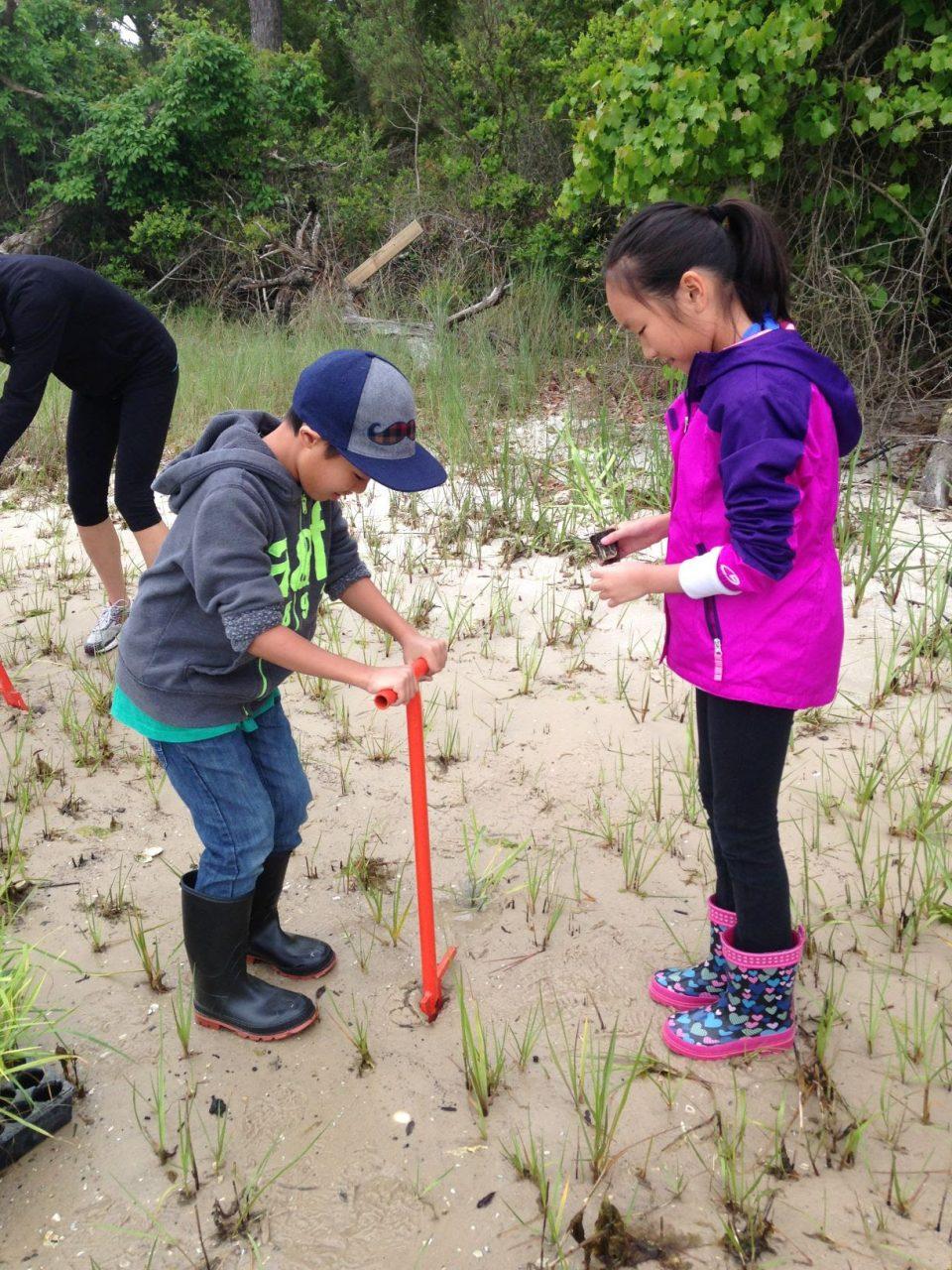 Volunteers are needed to salt marsh grasses at a the North Carolina Coastal Federation's Future Center for Coastal Protection and Restoration. Photo: Coastal Federation