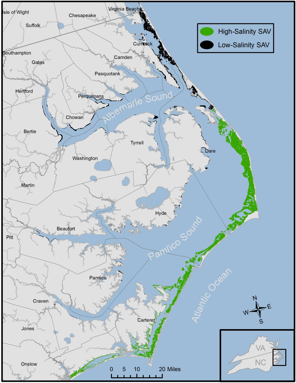 North Carolina has the largest acreage of submerged aquatic vegetation on the East Coast with most located within the Albemarle-Pamlico estuary, which is home to 14 species of SAV. Map: Tim Ellis, APNEP