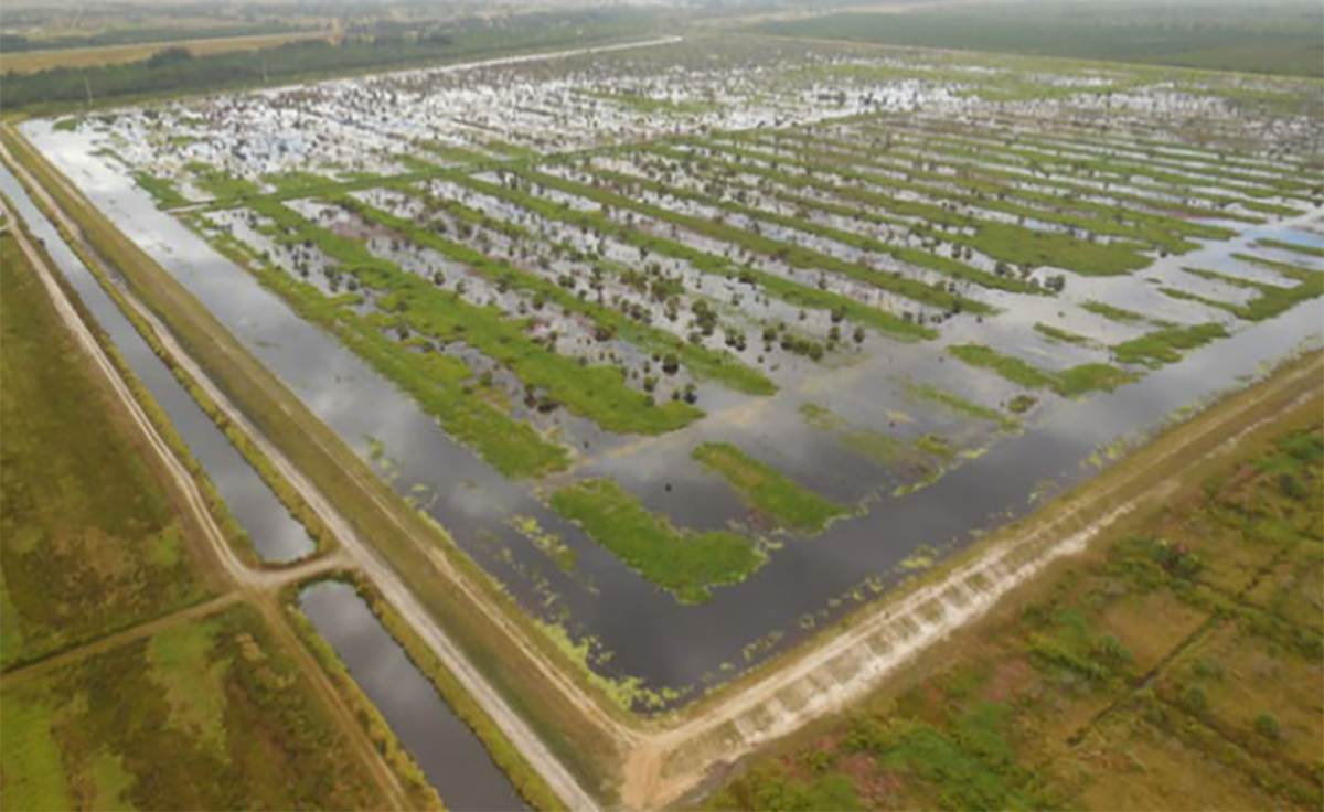 Flooding farmland is a potential tool for improving resilience to coastal riverine flooding, according to a recent study. Photo: N.C. Policy Collaboratory