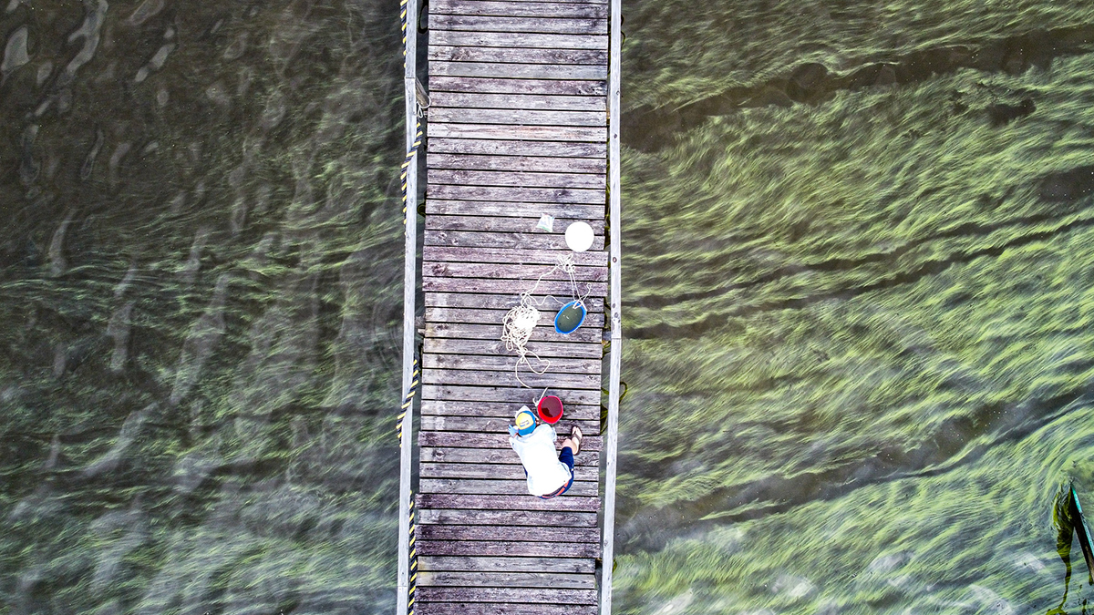 An algal bloom on the Chowan River is visible from above. Photo: A.Loven/UNC