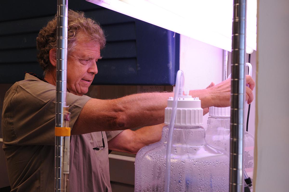Dr. Hans Paerl. Photo: UNC