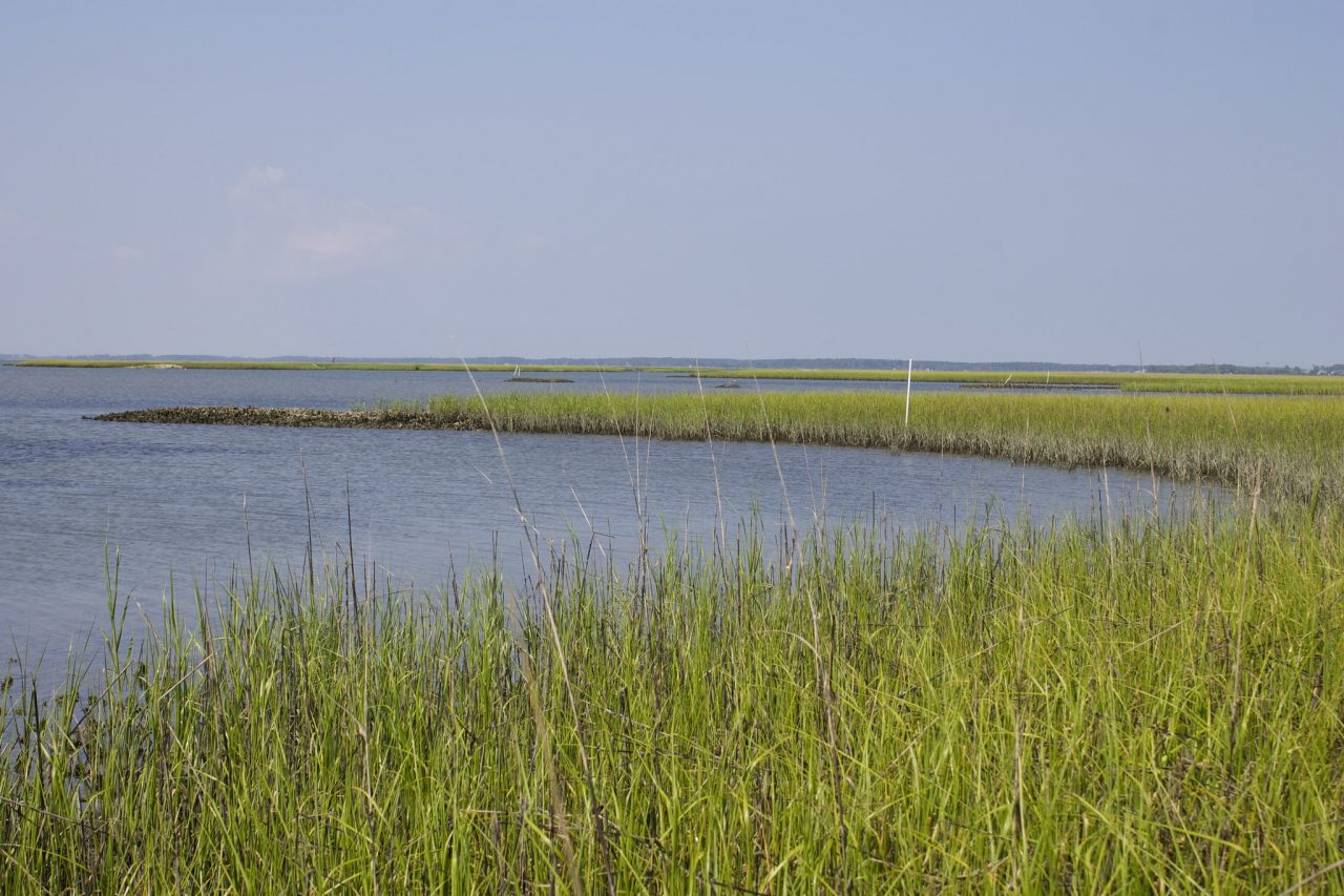 Middle Marsh near Beaufort and Harkers Island. Photo: Photo credit: E. Woodward/UNC Institute of Marine Sciences