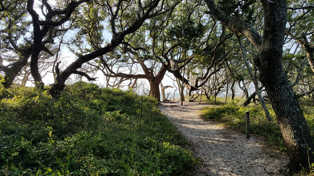 The trail through the  132-acre  Springer's Point Preserve winds from Loop Road to the sound. Photo: Coastal Land Trust