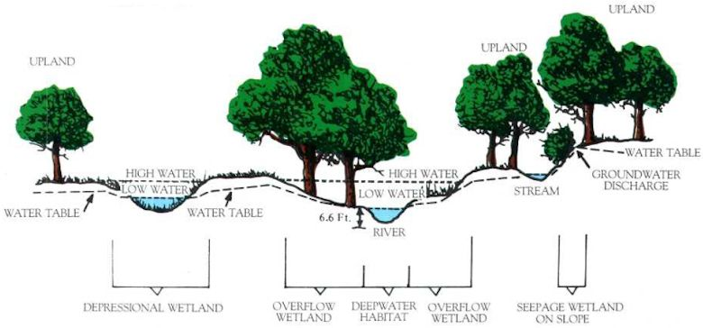 """The depression on the left would be considered an """"isolated wetland"""" because it isn't directly connected to the river in the center yet sits on a low spot on the water table. Illustration: U.S. Fish and Wildlife Service"""